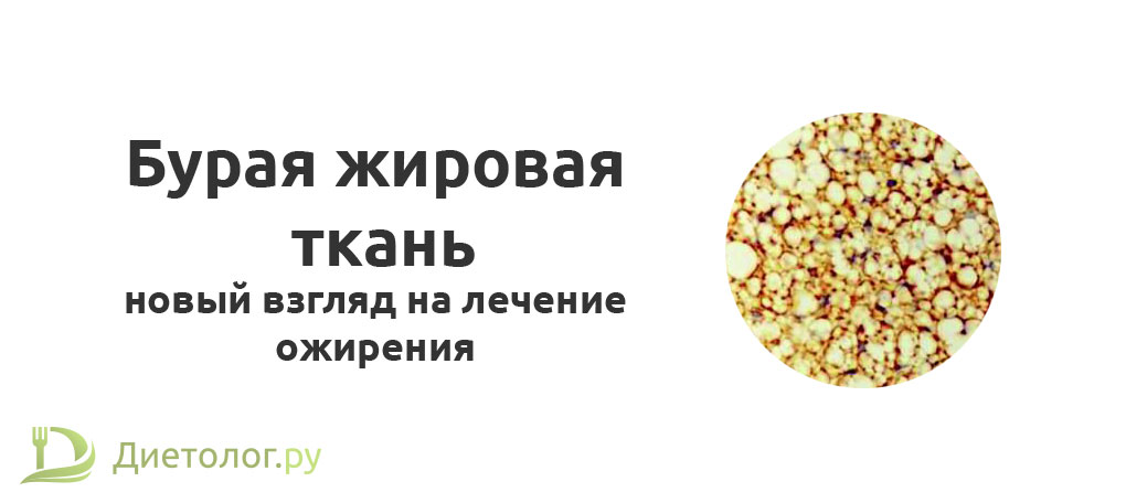 Бурая жировая ткань (коричневый жир)